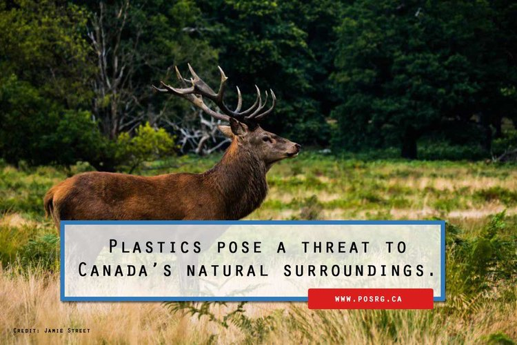 Plastics pose a threat to Canadas natural surroundings